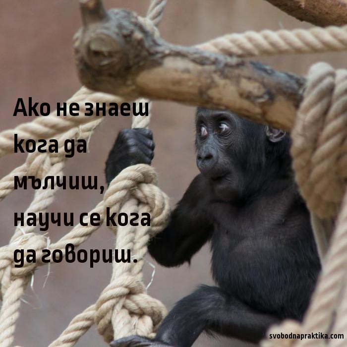 Kratak_sedmichen_komentar_13